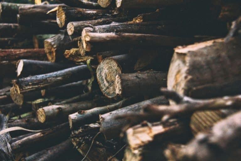 Holz-Äste