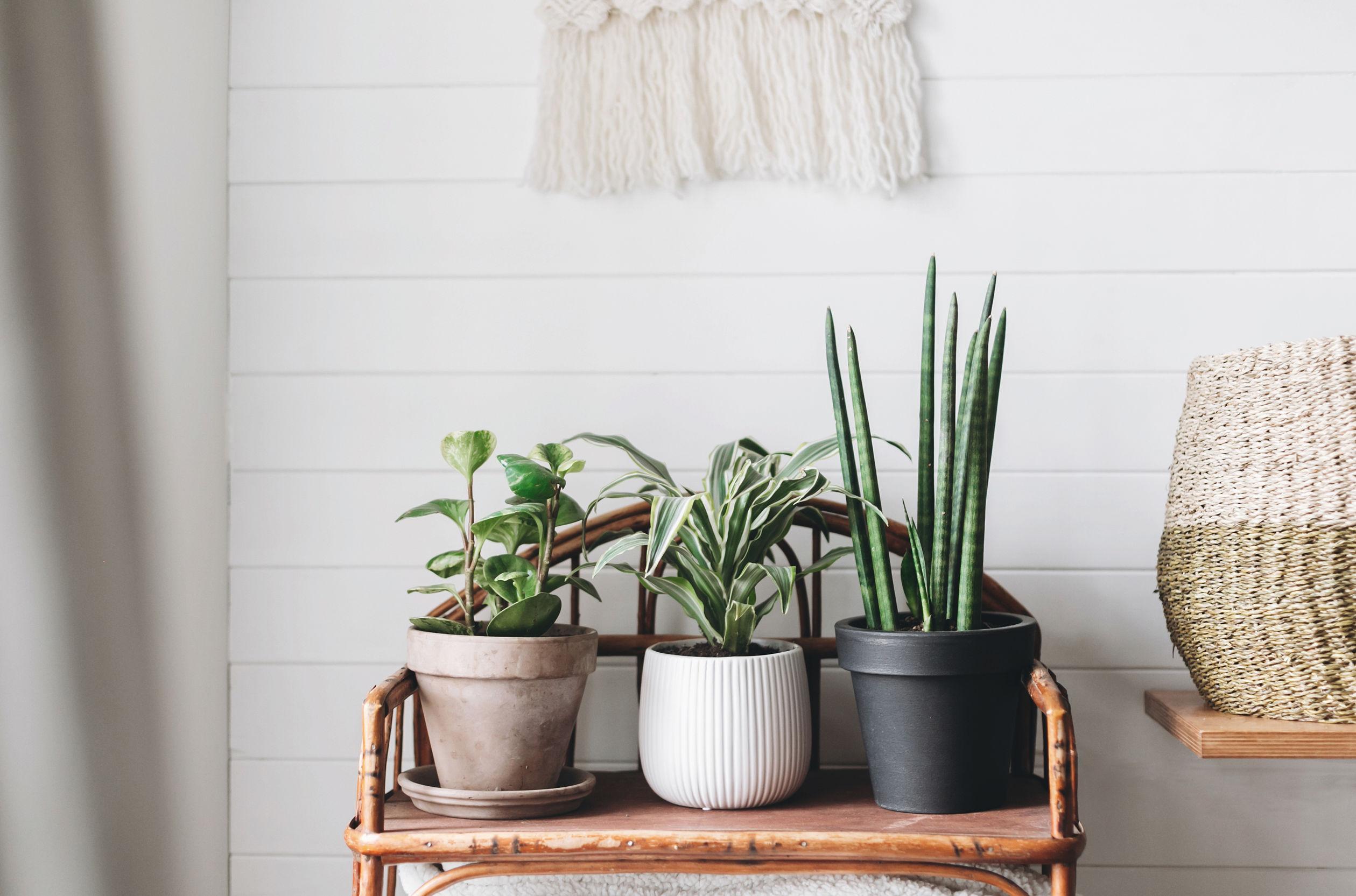 Pflanzenständer