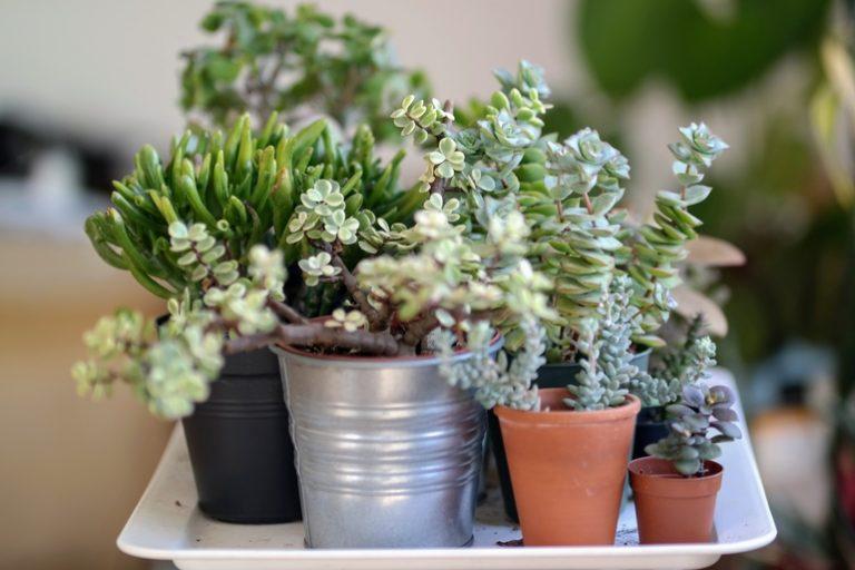 Pflanzenständer-1