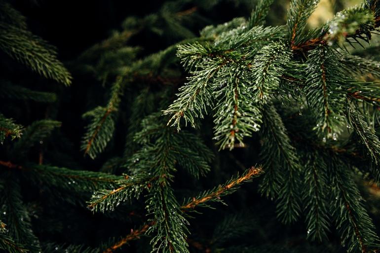 Weihnachtsbaumständer-1