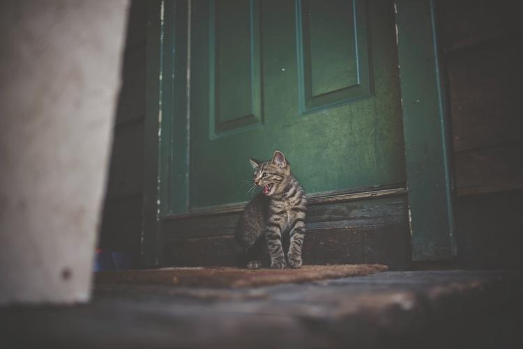 Katzenklappe: Test & Empfehlungen (10/21)