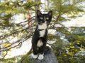 Katzenschreck: Test & Empfehlungen (10/21)