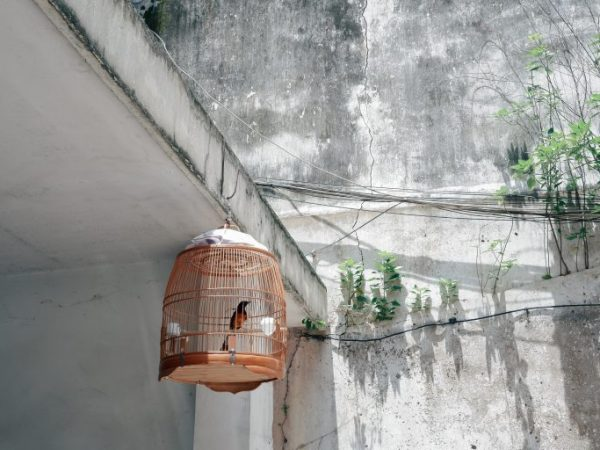 Bildquelle: Unsplash.com / Duy Hoang