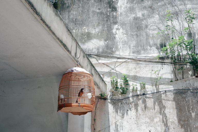 Vogelkäfig-header