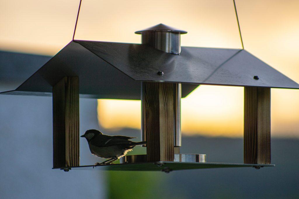 Vogelhäuser -header