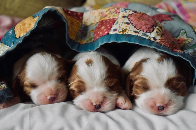 Hundedecke