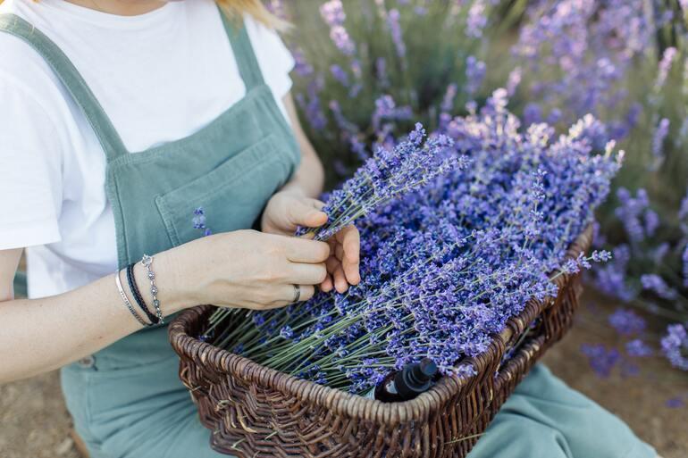 Ein Korb der mit Lavendel gefüllt ist.