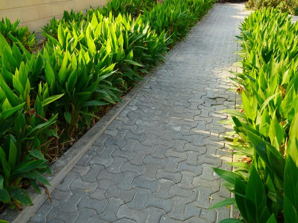 Scenic view of landscaped path with plants and stones in yard. Backyard of residential house. Stone pedestrian sidewalk going into the distance among Landscaping in home garden. Concrete pavement.