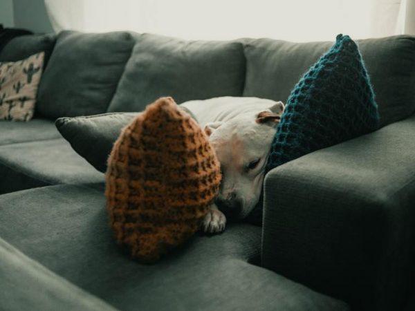 Eine Recamiere mit Schlaffunktion ist ideal, um sich zwischendurch auszuruhen oder einen Mittagsschlaf zu halten. (Bildquelle: Jonathan Cooper/ Unsplash)