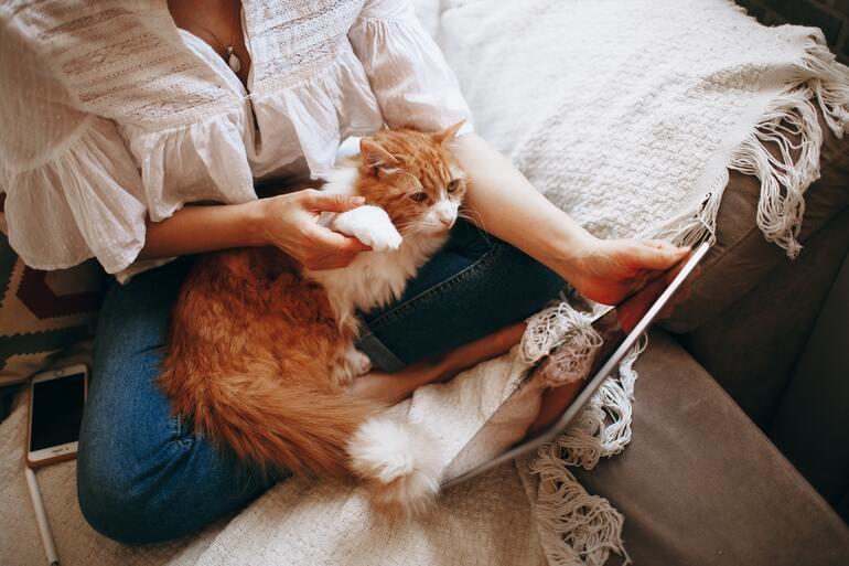 Bed, cat